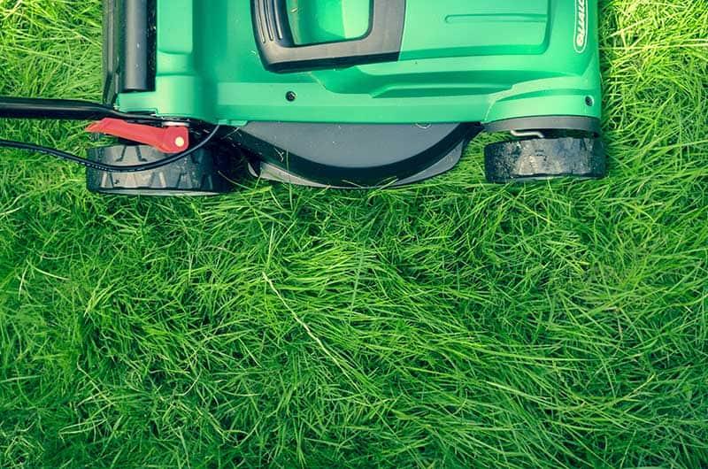lawn maintenance lawn care services