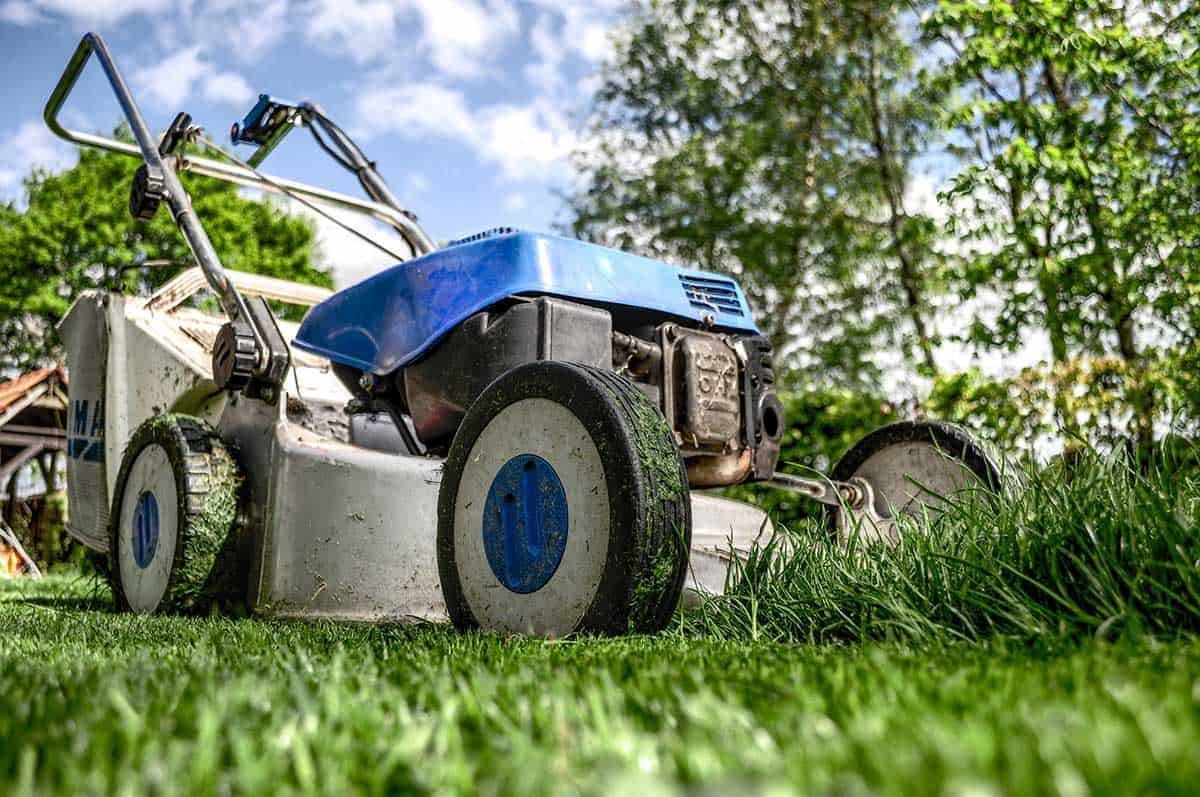 lawn mowing lawn maintenance