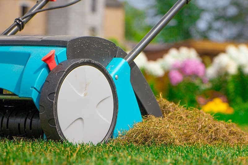lawn dethatching lawn care