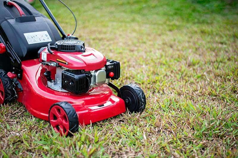lawn repair lawn care