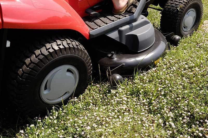 lawn weeding lawn care